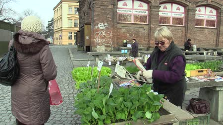 cebolinha : OLOMOUC, CZECH REPUBLIC, MARCH 30, 2018: Market sale of lettuce, green salad, kohlrabi and chives in the greenhouse seedlings transplant, tradition in the city of Olomouc, gardening, bio quality