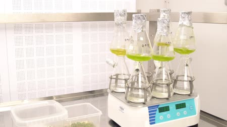 organizma : OLOMOUC, CZECH REPUBLIC, OCTOBER 3, 2018: Storage, oxygenation and laboratory sample preparation plant hale cress and mouse-ear cress or Arabidopsis thaliana is model plant, buttles tube