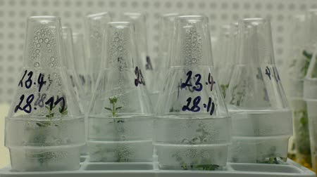 madde : Research scientist medical plants tissue for medicinal purposes, bottles tube test growth chamber in vitro clone, laboratory genetic phytotron, cultivation growth, nutrient agar box, biotechnology Stok Video