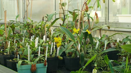 floriculture : OLOMOUC, CZECH REPUBLIC, NOVEMBER 28, 2018: Tropical greenhouse and a collection of rare endangered and legally protected carnivorous and orchid plants and other tropical species