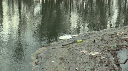 cisne : OLOMOUC, CZECH REPUBLIC, DECEMBER 19, 2018: Dead mute swan Cygnus olor bird on the river water Morava with trash plastic bottles with dirt transmission of diseases and infections of bird flu