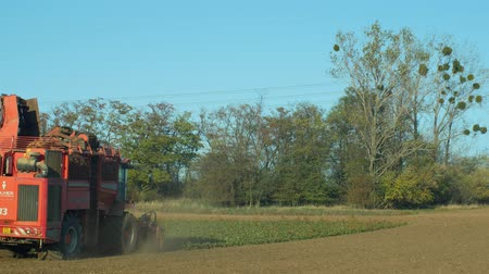 colhida : OLOMOUC, CZECH REPUBLIC, OCTOBER 27, 2018: Harvesting sugar fresh beet Beta in the field machine, combine harvested , loading conical tubers ripe root, loader from a large pile, Europe