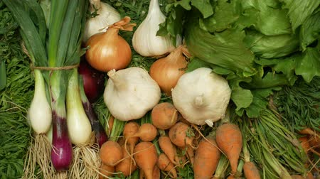 enzymes : Farm organic vegetables directly from garden carrots, yellow and red onions, garlic, green lettuce salad , all in a wood box crate mixed shop organic food health, without chemicals, sprays pesticides Stock Footage