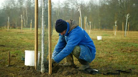 protects : OLOMOUC, CZECH REPUBLIC, DECEMBER 15, 2019: Planting fruit trees on meadow near floodplain forest. White protects ornamental and fruit trees from sun and frost damage. Man worker working forester