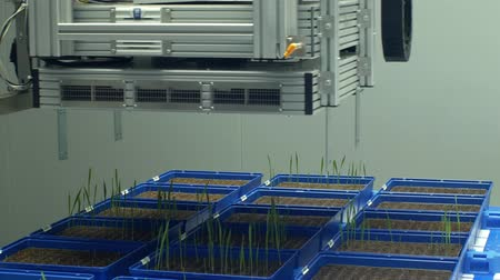 fotoszintézis : OLOMOUC, CZECH REPUBLIC, APRIL 11, 2018: Phenotyping line robotic automatic for scientific research measurement system technology of photosynthesis, chlorophyll, phenotype experimental Stock mozgókép
