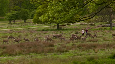 richmond park : People between deers