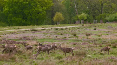 richmond park : Deers in the afternoon