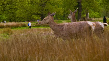 richmond park : Three Deers in the picture
