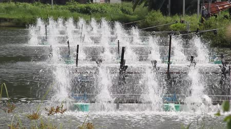 krewetki : surface aerators in shrimp farming