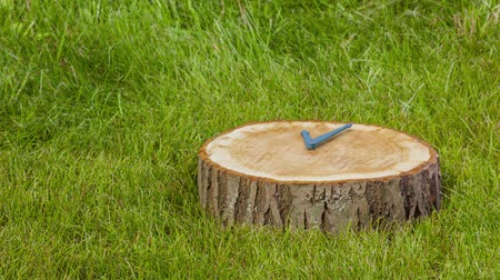 minutos : 3d rendering of clock hands on a tree stump. CG animation. Modern envionment background, motion design for poster, cover, branding, banner.
