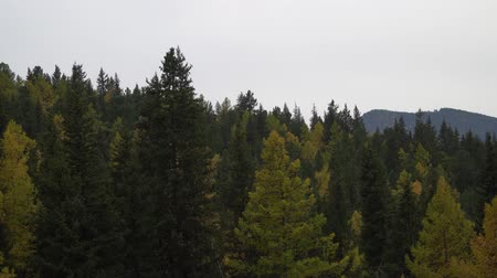 donuk : Autumn trees swaying in the open field near the Altai mountains.