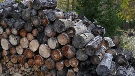 silvicultura : Heap of wood logs ready for winter. Stack of chopped firewood lying under the trees. Vídeos