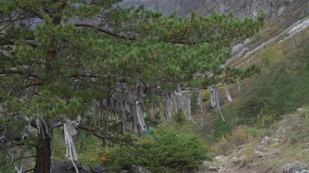 culto : Ritual ribbons on sacred tree in Altai Mountains. Shamanism. Vídeos