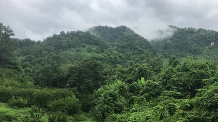 Moisture and fertility of forests and mountains in the rainy season of Thailand. Stock Footage