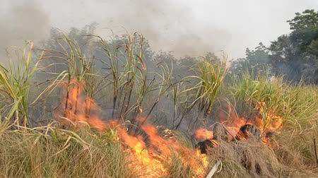 plantio : Fire burning sugarcane to make harvesting faster.