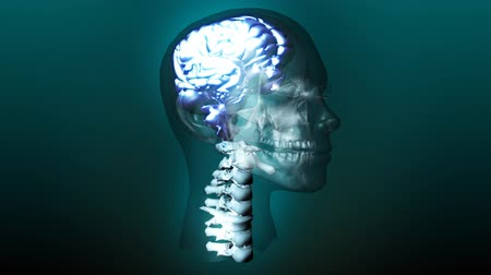 science background : Animated Human Skull showing Brain