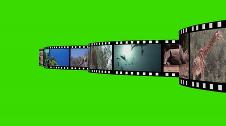 kulaklar : Collage of Wildlife footage against a Green Background