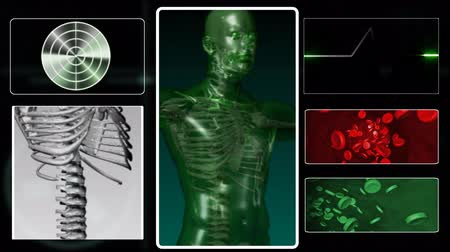 forma tridimensional : Digital human body study in 3D