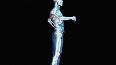 csontváz : Stock Animation showing a Spinal Injury