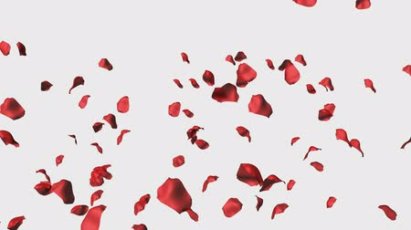 flower : High Definition Broadcast Quality 3D Animation of Rose Petals Falling Stock Footage