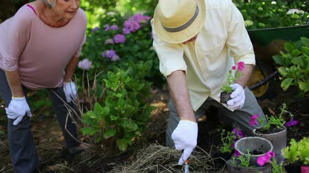 retirement : Retired couple gardening together with hats