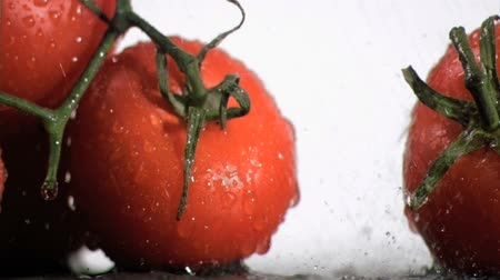 rajčata : Tomatoes in super slow motion watering by droplets against a white background