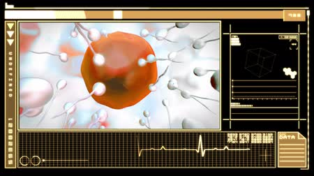 plemniki : Medical digital  interface showing egg cell fertilization in orange and black