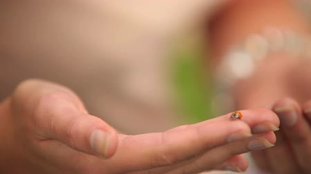 joaninha : Ladybird crawling over girls hand on a sunny day
