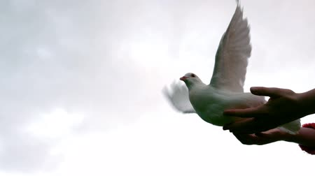 uçan : Hands releasing a dove in slow motion