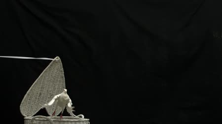 dove of peace : White dove of peace flying out of basket on black background in slow motion Stock Footage