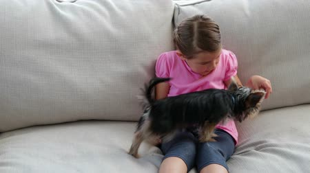kanapa : Cute little girl playing with yorkshire terrier puppy at home in the living room