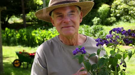 portre : Retired man gardening and smiling at camera at home in the garden