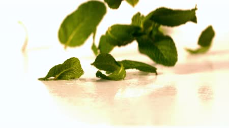 menta : Fresh mint leaves falling onto white surface in slow motion
