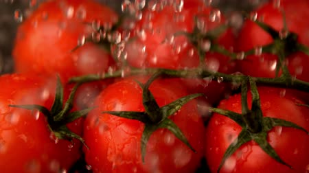cherry domates : Water raining on cherry tomatoes in slow motion