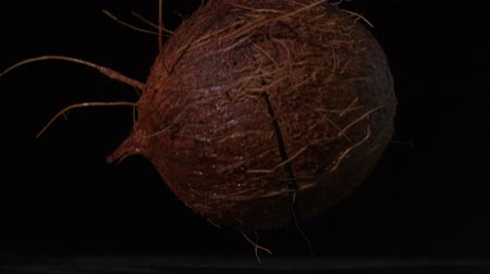 lento : Coconut falling and splitting on black background in slow motion