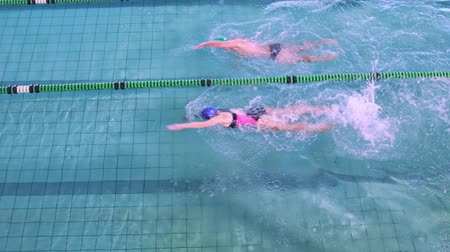 nadador : Fit swimmers racing in the pool in the leisure center Vídeos