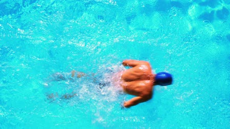 nadador : Fit swimmer in the swimming pool on a sunny day