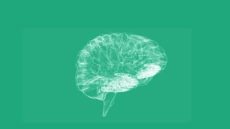 agy : Revolving transparent human brain graphic on green background