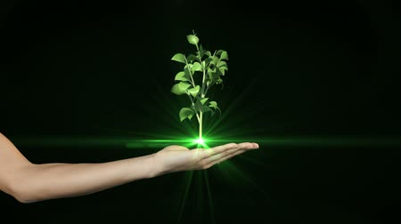 саженцы : Hand presenting digital green plant growing on black background
