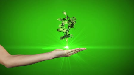 саженцы : Hand presenting digital green plant growing on green background Стоковые видеозаписи