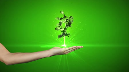 rostoucí : Hand presenting digital green plant growing on green background Dostupné videozáznamy