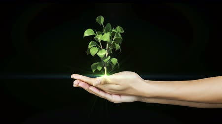 саженцы : Hands presenting digital green plant growing on black background