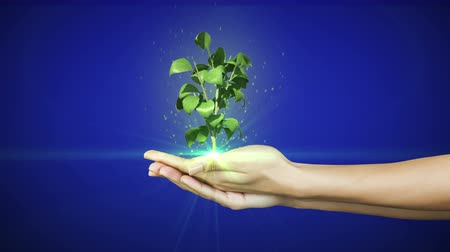 саженцы : Hands presenting digital green plant growing on blue background
