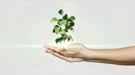 саженцы : Hands presenting digital green plant growing on white background