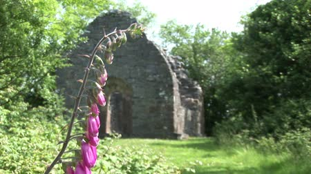 irlandia : A pink flower in the foreground, with an ancient ruin in the background