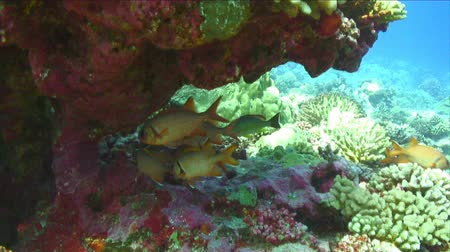 hluboký : Under water footage of Swimming off a coral reef