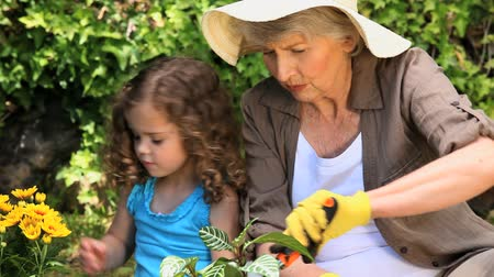 внучка : Grandmother and granddaughter gardening in the garden Стоковые видеозаписи