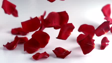 valentin nap : Red rose petals falling down in slow motion