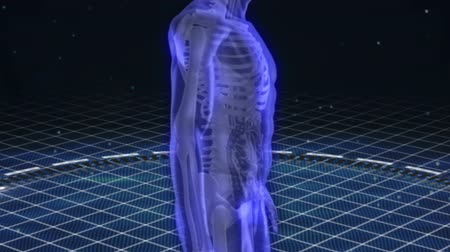 csontváz : Virtual human body scan showing skeleton and organs Stock mozgókép