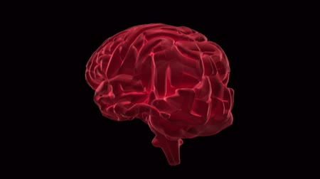 agy : Revolving pink brain zooming in to show nervous system on black background
